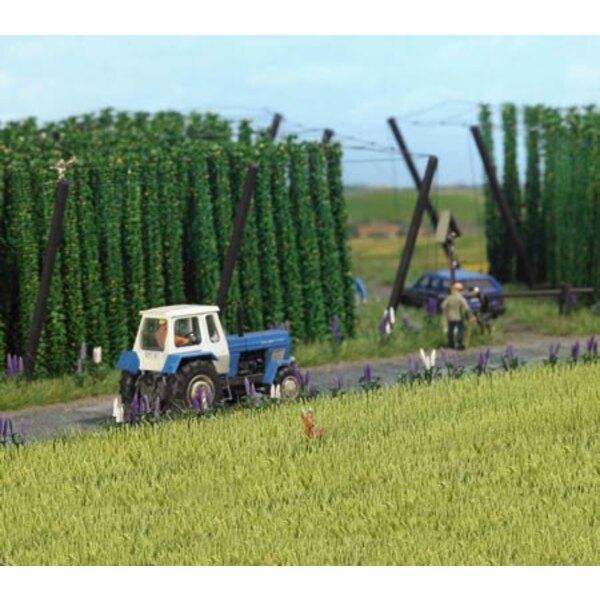 Felder von Gerste